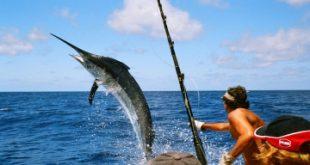 Top 9 Địa chỉ bán dụng cụ câu cá tốt nhất Sài gòn
