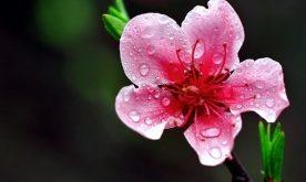 Top 9 Mùa hoa đẹp nhất Việt Nam